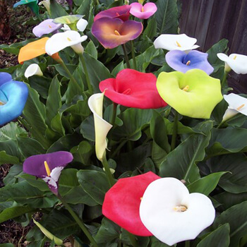 Rohlffs Resident Adds Color and Joy to Spring Time